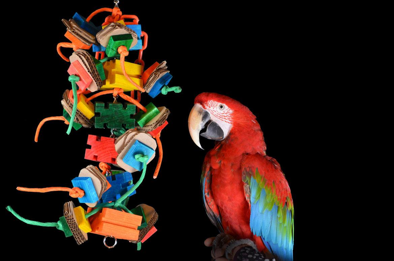 Speelgoed-voor-uw-papegaai