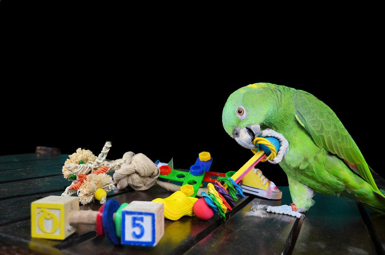 Voet-&-tafel-speelgoed