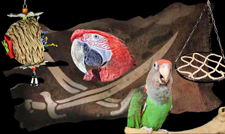Papegaaienkooi-Huisvesting-&-vervoer