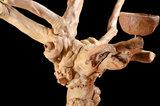 java boom voor uw papegaai 4