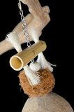 coconut parrot toy  2