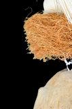 coconut parrot toy  3