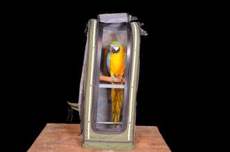 6 Papegaaien rugzak Celltei X-Large