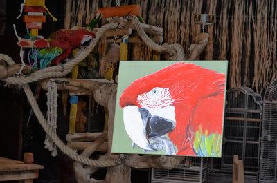 Groenvleugel Ara Olieverf Schilderij