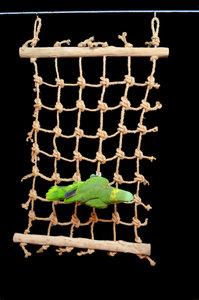 Papegaaienspeelgoed klimmen