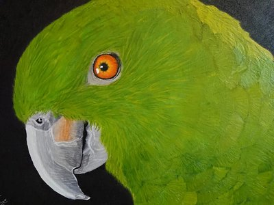 Amazone Olieverf Schilderij
